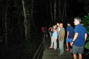 Guided Night Walk